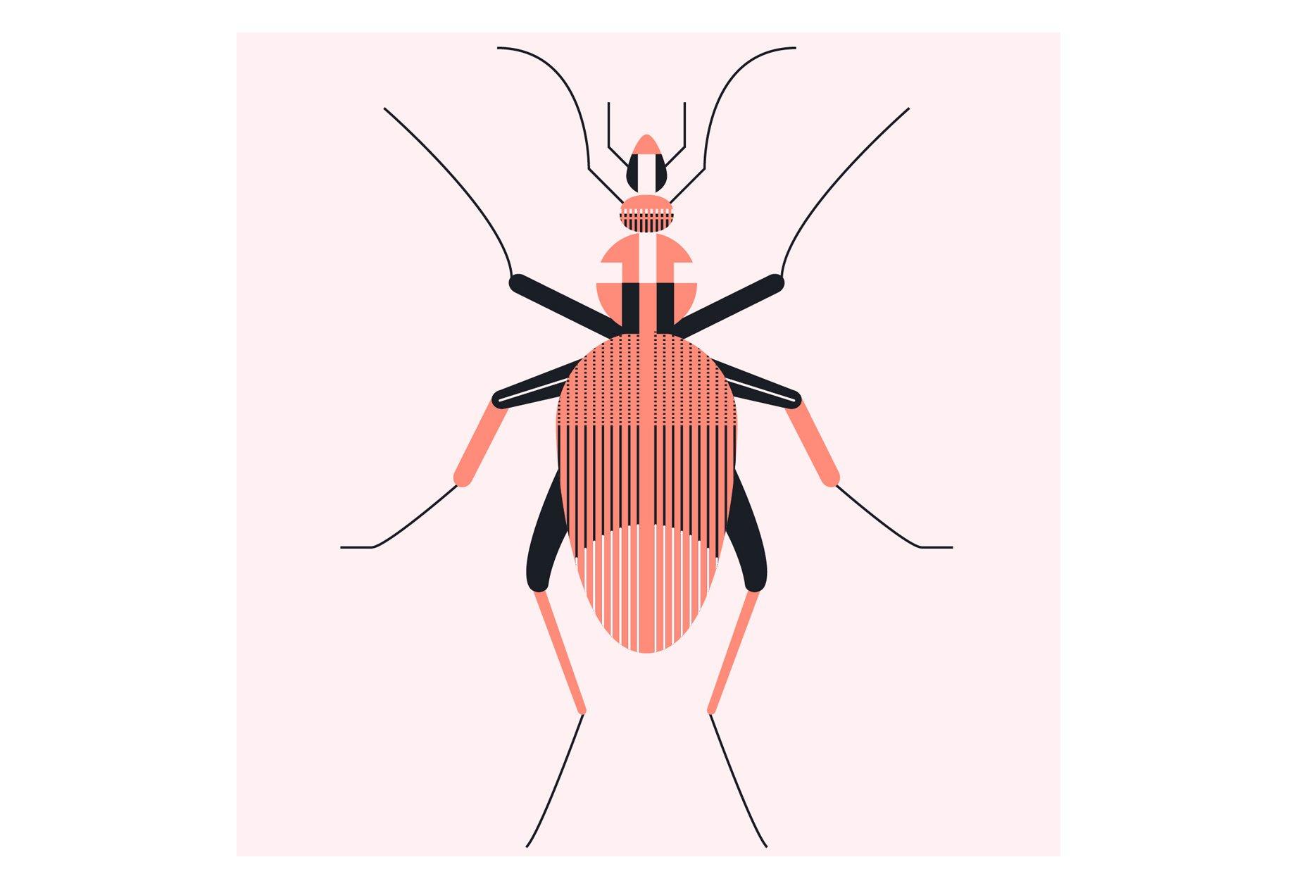 insects-illustration-01-alice-iuri